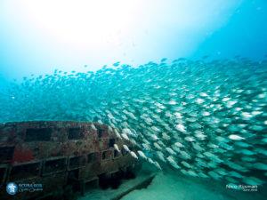 Artificial Reef - Rancadores