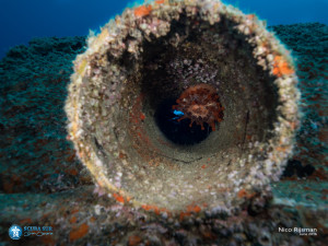 Artificial Reef - Anemone