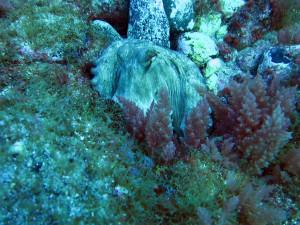 Arguineguin Reef