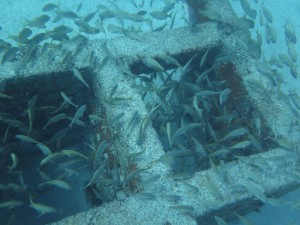 Artificial Reef - Structures
