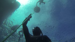 Level 1 Freediving